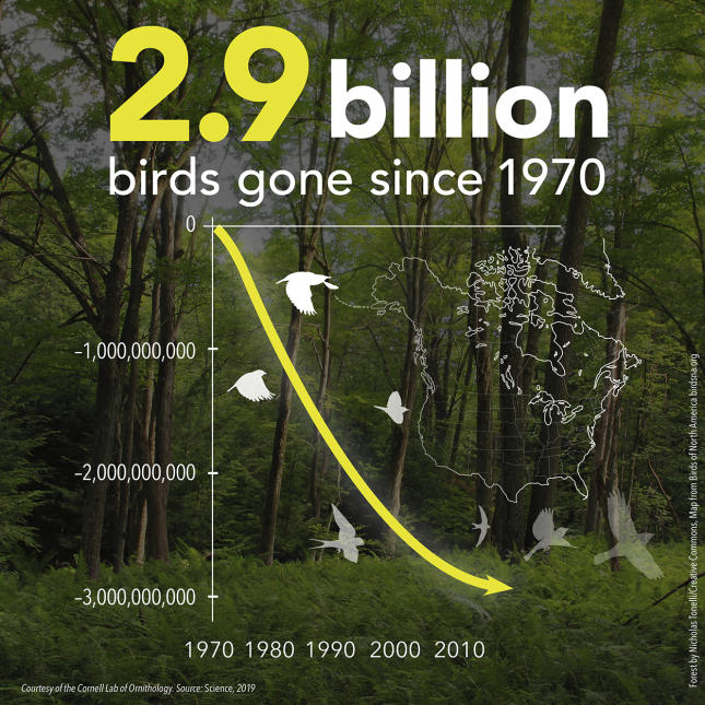 3 Billion Birds - 2.9 Billion Graph